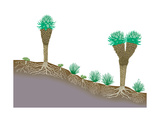 Vegetation Profile of Tropical Mountain Lands. Biosphere, Earth Sciences Posters by  Encyclopaedia Britannica