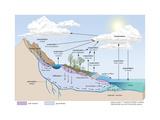 Water Cycle, Atmosphere, Earth Sciences Posters van  Encyclopaedia Britannica