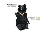 Asiatic Black Bear (Ursus Thibetanus), Mammals Poster by  Encyclopaedia Britannica