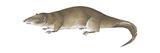 Giant Otter Shrew (Potamogale Velox), Mammals Posters af Encyclopaedia Britannica