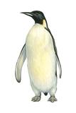 Emperor Penguin (Aptenodytes Forsteri), Birds Posters af Encyclopaedia Britannica