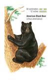 American Black Bear (Ursus Americanus), Mammals Prints