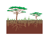 Vegetation Profile of a Savanna. Biosphere, Earth Sciences Impressão em tela esticada por  Encyclopaedia Britannica