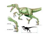 Dinosaur Posters