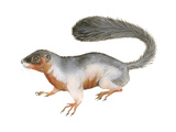Prevost's Squirrel (Callosciurus Prevosti), Tricolored, Squirrel, Mammals Poster by  Encyclopaedia Britannica