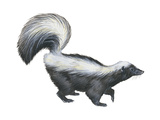 Striped Skunk (Mephitis Mephitis), Mammals Posters by  Encyclopaedia Britannica