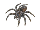 Bird-Eating Spider (Theraphosa), Arachnids Plakater af Encyclopaedia Britannica