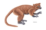 Notharctus, Extinct Lemur, Mammals Photo by  Encyclopaedia Britannica