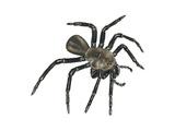 California Trapdoor Spider (Bothriocyrtum Californicum), Arachnids Poster by  Encyclopaedia Britannica