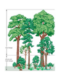 Vegetation Profile of a Temperate Deciduous Forest. Biosphere, Earth Sciences Prints by  Encyclopaedia Britannica