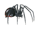 Black Widow (Latrodectus), Spider, Arachnids Posters by  Encyclopaedia Britannica