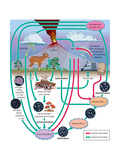 Nitrogen Cycle, Biosphere, Atmosphere, Earth Sciences Pôsteres por  Encyclopaedia Britannica