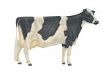Holstein-Friesian Cow, Dairy Cattle, Mammals Print by  Encyclopaedia Britannica
