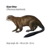 Giant Otter (Pteronura Brasiliensis), Mammals Stretched Canvas Print by  Encyclopaedia Britannica