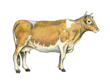 Dairy Cattle (Bos Taurus), Mammals Posters by  Encyclopaedia Britannica