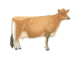 Jersey Cow, Dairy Cattle, Mammals Posters
