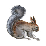 Abert's Squirrel (Sciurus Aberti), Mammals Stretched Canvas Print by  Encyclopaedia Britannica