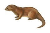 European Otter (Lutra Lutra), Mammals Posters by  Encyclopaedia Britannica