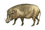 Warthog (Phacochoerus Aethiopicus), Mammals Kunst på metall av  Encyclopaedia Britannica