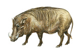 Warthog (Phacochoerus Aethiopicus), Mammals Posters by  Encyclopaedia Britannica