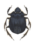 Scarab Beetle (Canthon Pilularius), Insects Photo by  Encyclopaedia Britannica