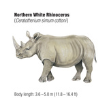 Northern White Rhinoceros (Ceratotherium Simum Cottoni), Mammals Posters van  Encyclopaedia Britannica