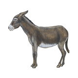 Donkey (Equus Asinus), Mammals Posters by  Encyclopaedia Britannica