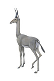 Dibatag (Ammodorcas Clarkei), Mammals Posters