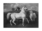 Arabian Horses, 19th Century Giclee Print by Eugene Fromentin