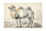A Camel Giclee Print by Cornelis Saftleven