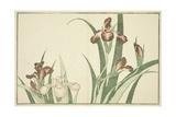 Iris, from the Picture Book of Realistic Paintings of Hokusai (Hokusai Shashin Gafu), C.1814 Giclee Print by Katsushika Hokusai