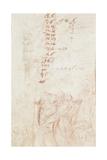 Fragmentary Copy, 1710-15 Giclee Print by Giuseppe Maria Crespi