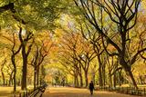 Usa, New York City, Manhattan, Central Park, the Mall Fotografisk tryk af Michele Falzone