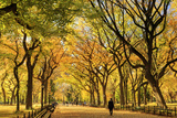 Usa, New York City, Manhattan, Central Park, the Mall Photographic Print by Michele Falzone