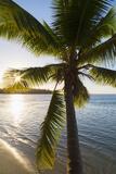 Palm Tree on Beach at Hauru Point, Mo'Orea, Society Islands, French Polynesia Photographic Print by Ian Trower