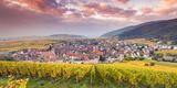 Sunset over the Vineyards Surrounding Riquewihr, Alsace, France Lámina fotográfica por Matteo Colombo