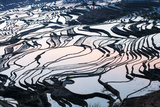 Rice Terraces in Yuanyang, Yunnan, China Photographic Print by Nadia Isakova