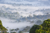 Mist, over Tropical Rainforest, Early Morning, Sabah, Borneo, Malaysia Photographic Print by Peter Adams