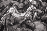 Wild Horses Rounded Up During Rapa Das Bestas (Shearing of the Beasts) Festival. Sabucedo, Galicia Photographic Print by Peter Adams