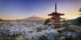 Japan, Yamanashi Prefecture, Fuji-Yoshida, Chureito Pagoda, Mt Fuji and Cherry Blossoms Fotografiskt tryck av Michele Falzone