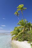 Beach at Tetamanu, Fakarava, Tuamotu Islands, French Polynesia Photographic Print by Ian Trower