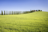 Road with Cypresses and Farmhouse. Orcia Valley, Siena District, Tuscany, Italy. Photographic Print by  ClickAlps