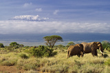 Mt. Kilimanjaro Viewed from Amboseli National Park, Kenya, Africa Photographic Print by Neil Thomas