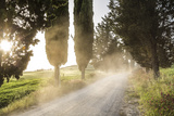 Cyclist on Dirt Road at Sunset, Tuscany, Italy Photographic Print by Peter Adams