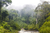 Mist and River Through Tropical Rainforest, Sabah, Borneo, Malaysia Photographic Print by Peter Adams