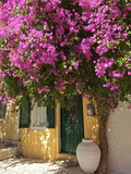 House Covered in Bougainvillea, Paxos, the Ionian Islands, Greek Islands, Greece, Europe Photographic Print by Neil Farrin