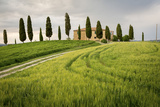 Val D'Orcia, Tuscany, Italy. a Lonely Farmhouse with Cypress Trees Standing in Line in Foreground. Photographic Print by Francesco Riccardo Iacomino