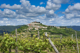 Vineyards, Motovun, Istria, Croatia Photographic Print by Katja Kreder