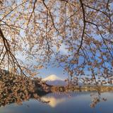 Japan, Yamanashi Prefecture, Kawaguchi-Ko Lake, Mt Fuji and Cherry Blossoms Photographic Print by Michele Falzone