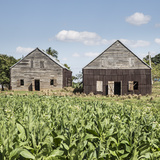 Drying House on a Tobacco Plantation, Pinar Del Rio Province, Cuba Photographic Print by Jon Arnold